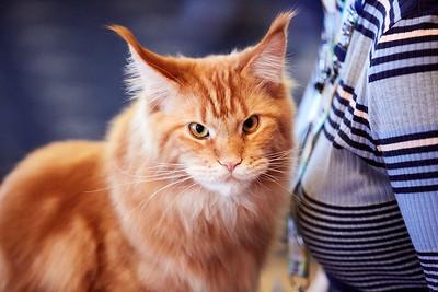 17.12.2017 Mezinárodní výstava koček (FIFe)