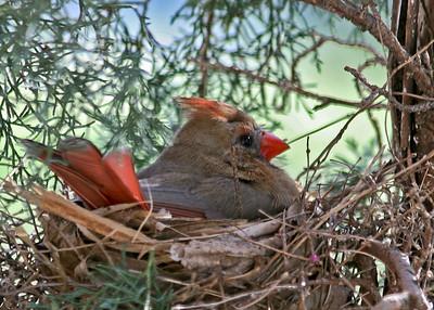 Cardinal Miscellaneous
