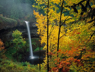 Oregon Streams, Forests, and Waterfalls