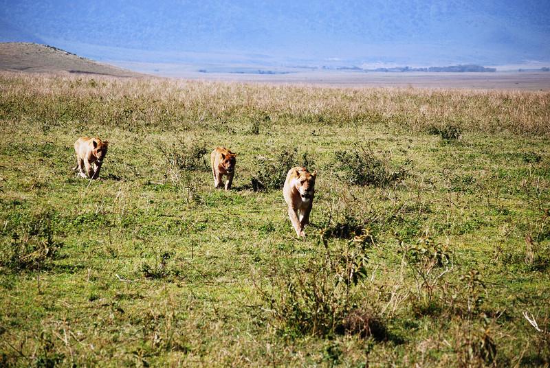 Ngorongoro (66).JPG