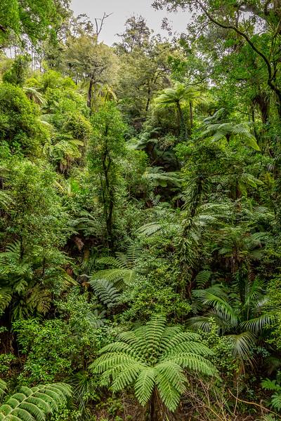 Auf dem «Abel Tasman Track»
