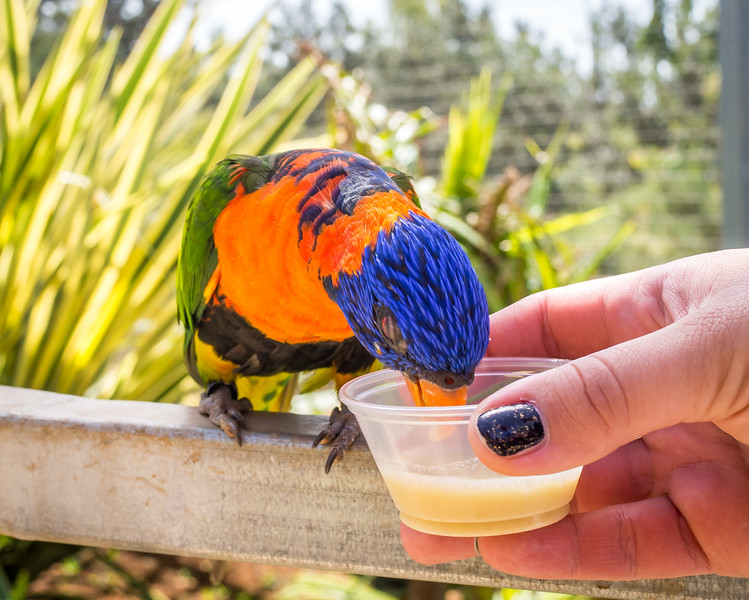 Feeding the birds in Paphos Zoo
