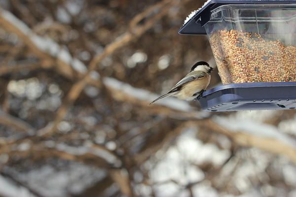17 Feb 2021 Falaise Birds