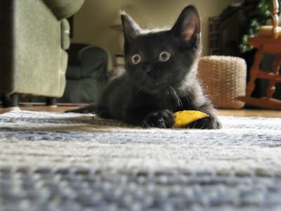 Kitten (now Pepper) at ~9 wks