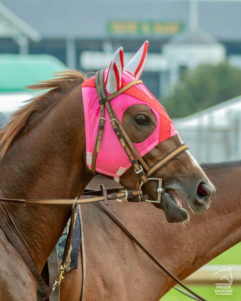 Horse Profiles