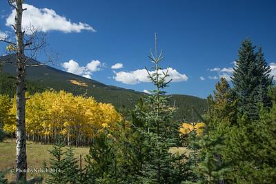 Mt. Evans Yellow 2014