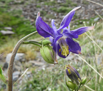Flora Purple, Blue & Brown