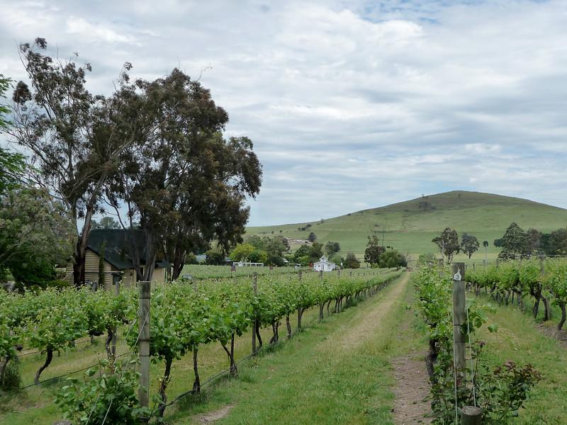 Melbourne - Yarra Valley wine tour
