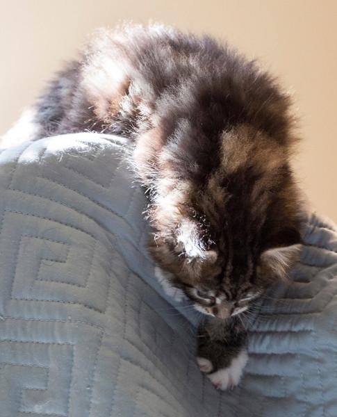 Kittens224.jpg