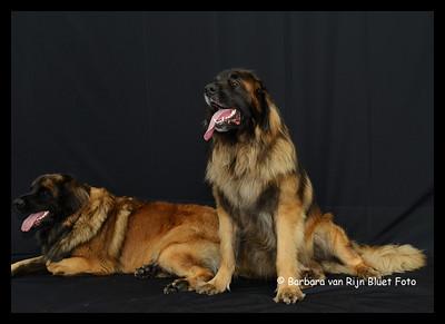 Basko en Simba