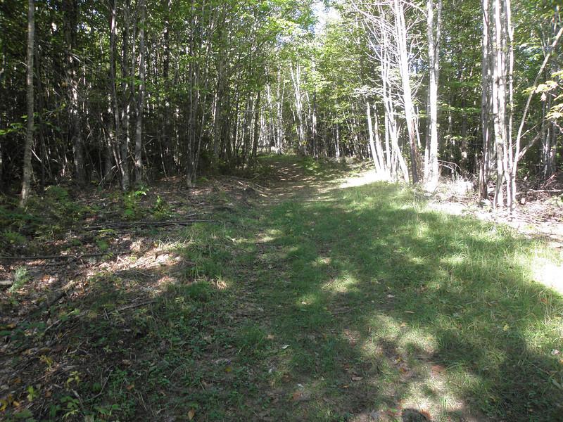 Nice trail.JPG