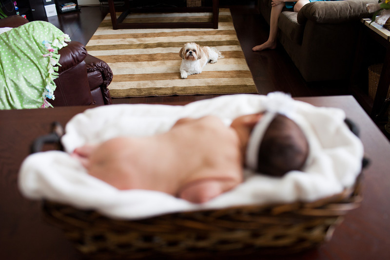 dc-newborn-photographer10.jpg
