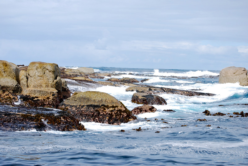 Seals off the Cape Penninsula