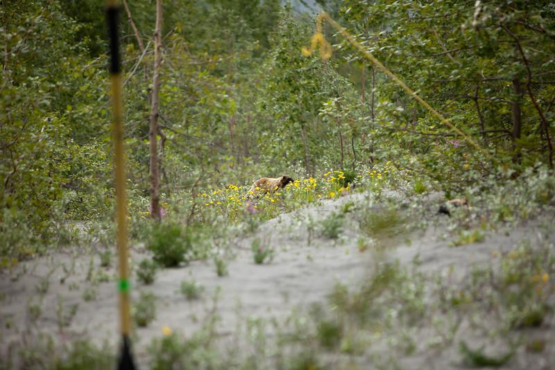 Alaska Copper River-8929.jpg