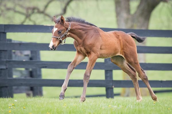 Palace Malice Foals '17