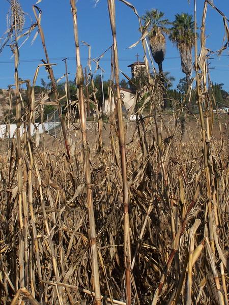 06-01-13_So_Much_Not_Corn-040.jpg