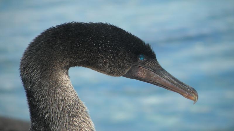 Galapagos2 585.JPG