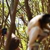 Madagascar 2017 (21)