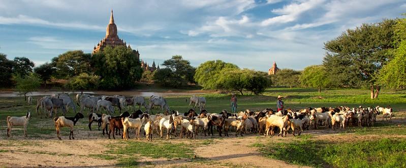 Myanmar 2012 jsc 126.jpg