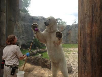 Brookfield Zoo Visits 2014 - iPhone