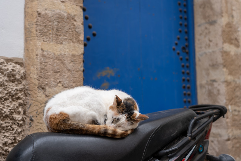 Sleeping cat in Essaouira, Morocco
