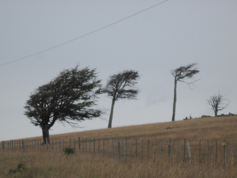 Wind ShapedTrees
