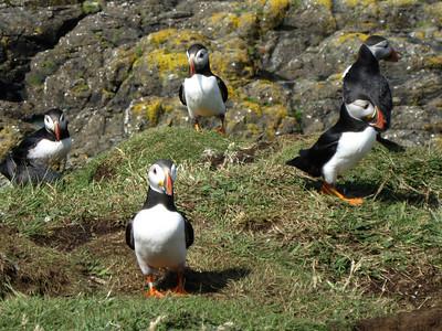 Hebridean birds, Aug 2009