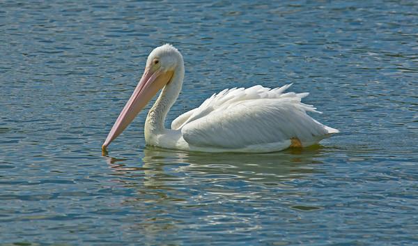 Viera Wetlands - March 18, 2014