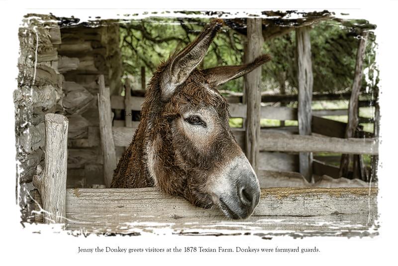 Postcard back Donkey.jpg