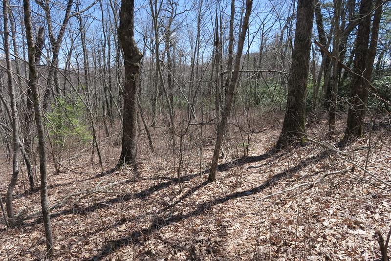 Shelton Pisgah Trail - 4,350'