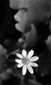 BW Flora