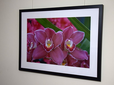 "20"" x 30""  Framed Photos"