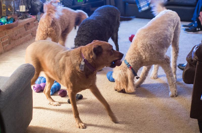 20161125-Dogs snacking-PMG_4761.jpg