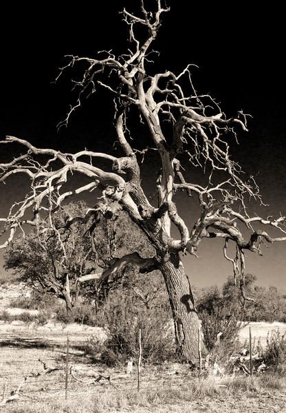 2013-11-17 Fred Tree B&W DSC04710.jpg