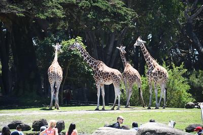 San Francisco Zoo and Sutro Baths June 2017