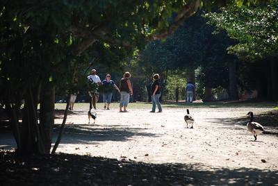 Swan Lake - September 27, 2009
