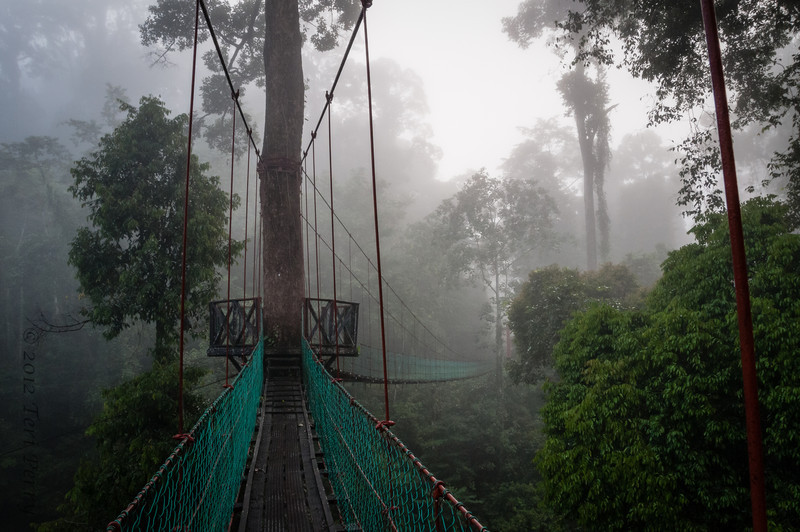 part of the canopy walk at Danum Valley