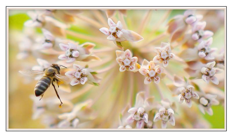 Bee Explosion.jpg
