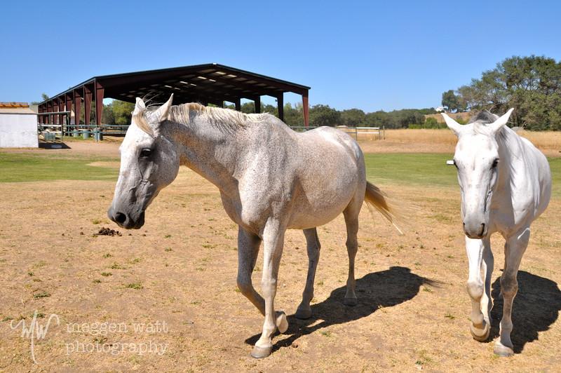 EB&Horses-041.jpg