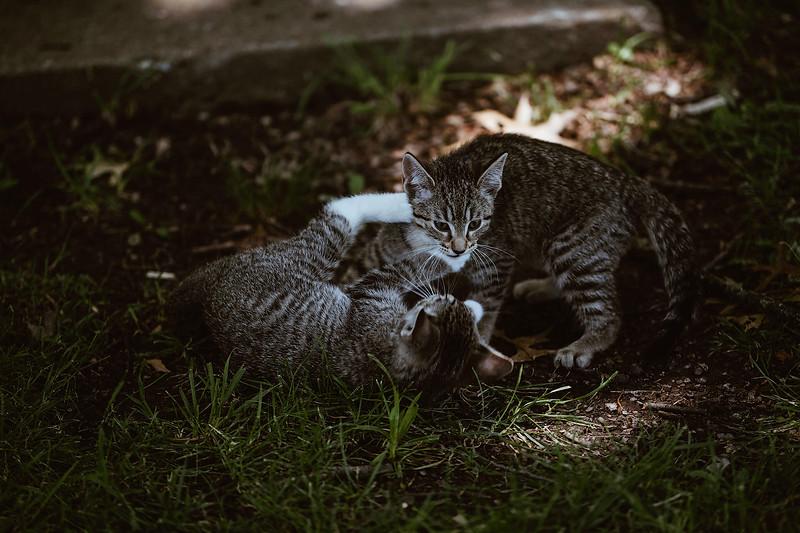 Girls & Kittens, July 1st - 18.jpg