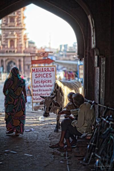 20111113_Jodhpur3_0007.jpg