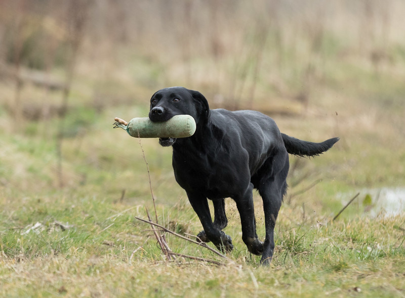 Dogs-5090.jpg