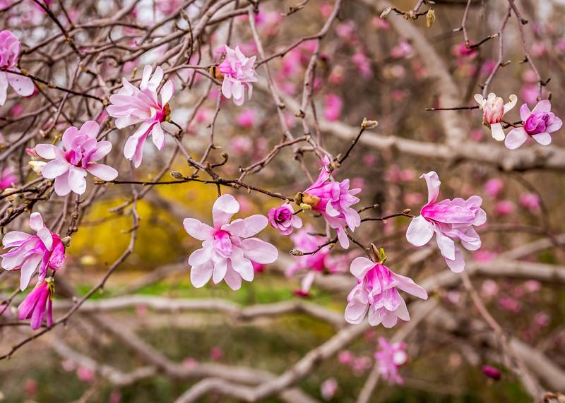 Arboretum_2019May2_1-4610-Edit.jpg