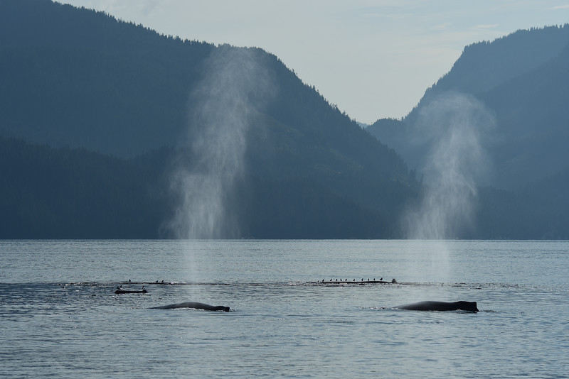 Whales, gulls and scenery