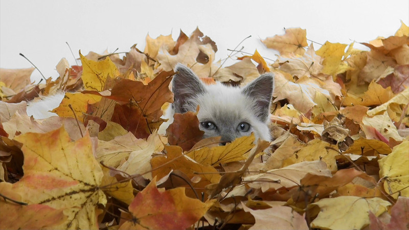 kitten_leaves_09.mov