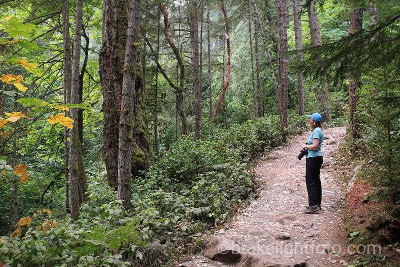 Hiking trail to Goldstream Trestle