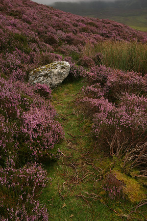 Knockanaffrin Ridge, Co Waterford, Ireland