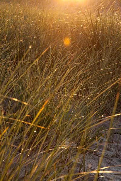 sunrise grass 2.jpg