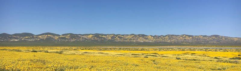 Panoramas of the wildflower bloom at Carrizo Plain National Monument