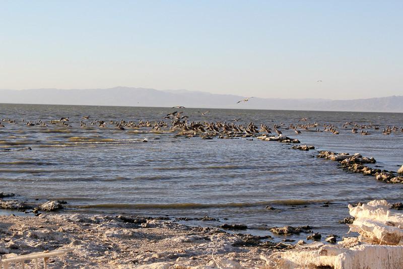 04 The Salton sea (21).JPG